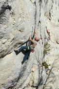 Rock Climbing Photo: Wild Iris