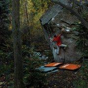 Rock Climbing Photo: Palm-Tree taking it down!
