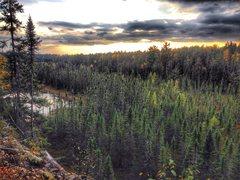 Rock Climbing Photo: View from atop Mooselandia wall. Swamp Wall swamp ...