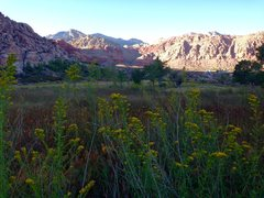 Rock Climbing Photo: Desert Meadow!!!