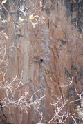 Rock Climbing Photo: Feline