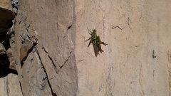 Rock Climbing Photo: Chipmunk meal....