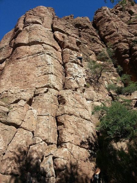 Ali in the 3rd ascent of Ali cat