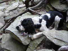 Crag Dog @ Ship Rock in NC <br /> <br />Trad is rad