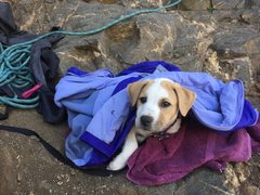 Lola, 9 weeks old at the crag.