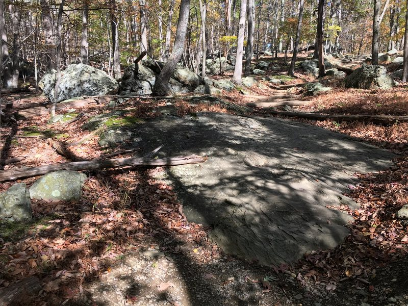 Hog Rock Nature Trail slab.<br> Turn left off the trail here to access the lowest problems for the Cunningham Falls area in Catoctin Mountain Park.