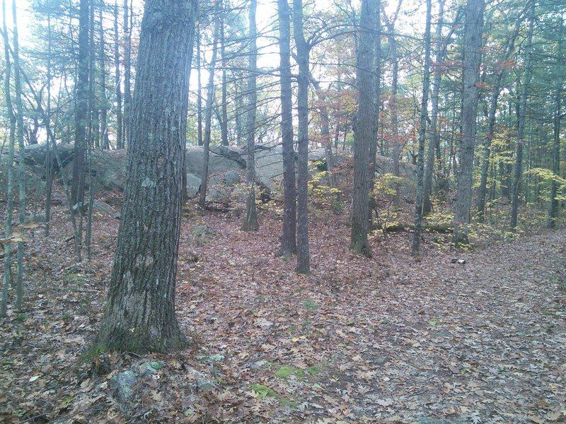 Rock Climbing Photo: Whale rock boulder