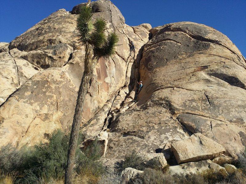 CJ climbing The Chief@SEMICOLON@ a fun 5.5