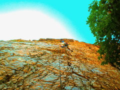 Rock Climbing Photo: Modest Man From Mandrake - view from the bottom.
