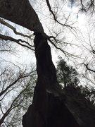 Rock Climbing Photo: Looking up at Wing and A Prayer