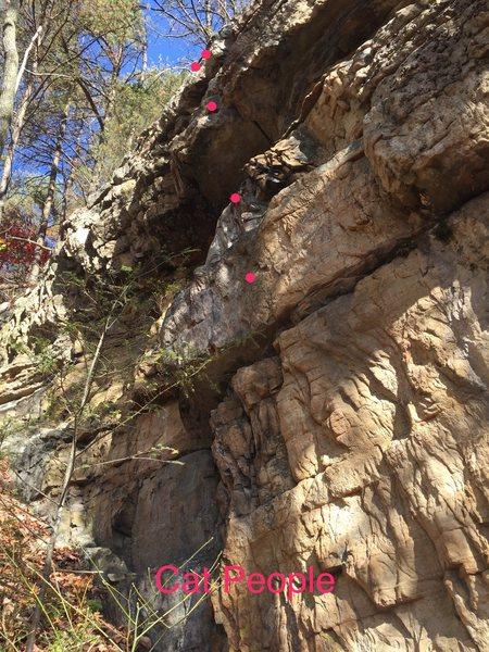 Rock Climbing Photo: Cat People