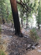 Rock Climbing Photo: YP Trail Area