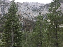 Rock Climbing Photo: Burn area from MJF Trail