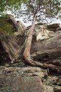 Rock Climbing Photo:  Beta photo: HC climbs the corner right of the tre...