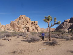 Echo Rock, Joshua Tree