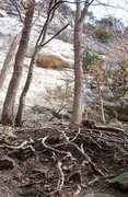 Rock Climbing Photo: Climb the roots along the access trail to Providen...