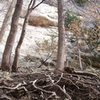 Climb the roots along the access trail to Providence Main Bluff