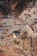 Rock Climbing Photo: I was born to climb.
