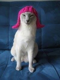 Rock Climbing Photo: Cat in a hat