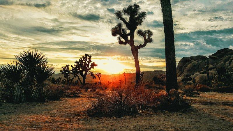 Rock Climbing Photo: Joshua Tree Sunset