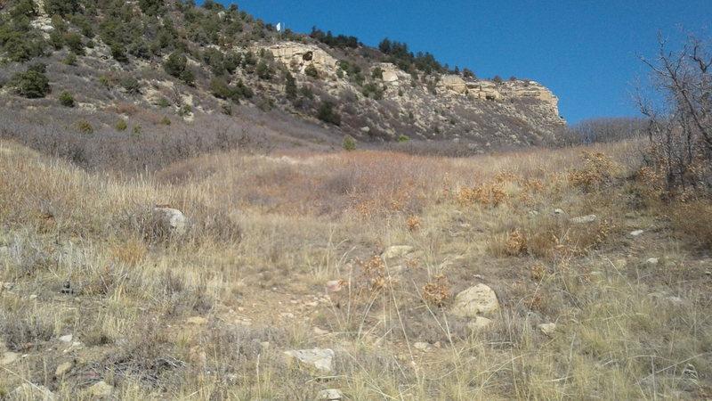 Meadow / scrub oak approach....