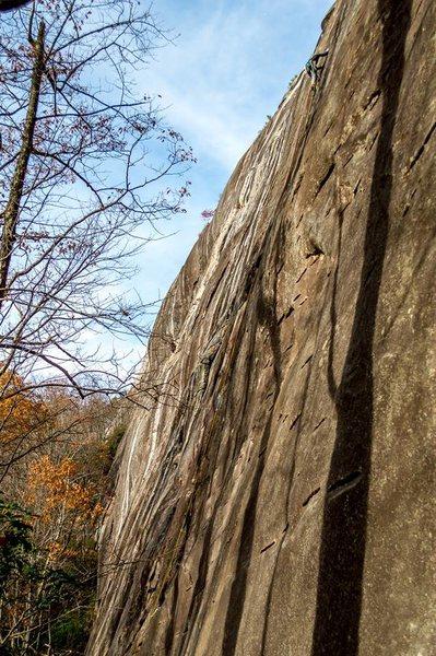 Rock Climbing Photo: High up on Cedar Blossom!