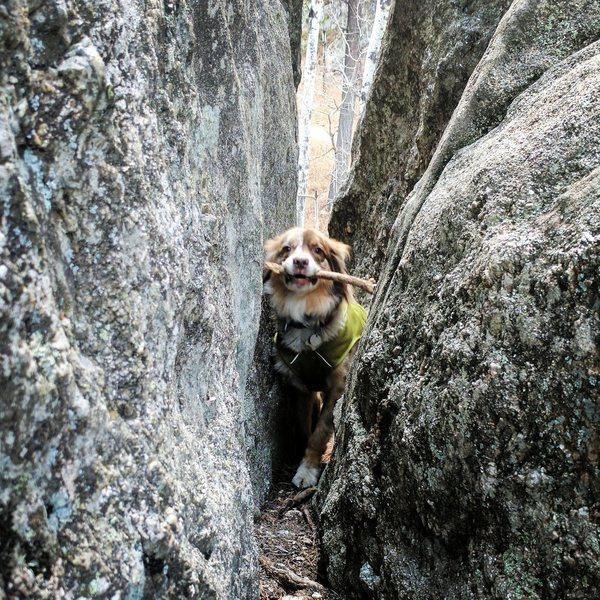 Rock Climbing Photo: Jack wiggles his way up the narrow gully at the ba...