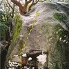 A--hole Arete.<br> <br> Note that this was taken on a wet day many years ago. It's not this mossy any longer...