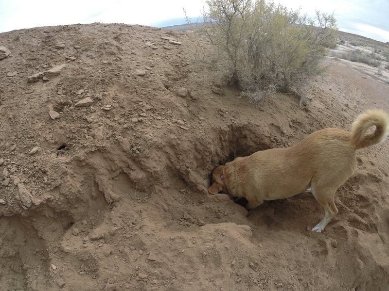 A good place at the base for dogs to dig.