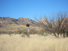 Rock Climbing Photo: A vulture sunning itself on a dead yucca. March 20...