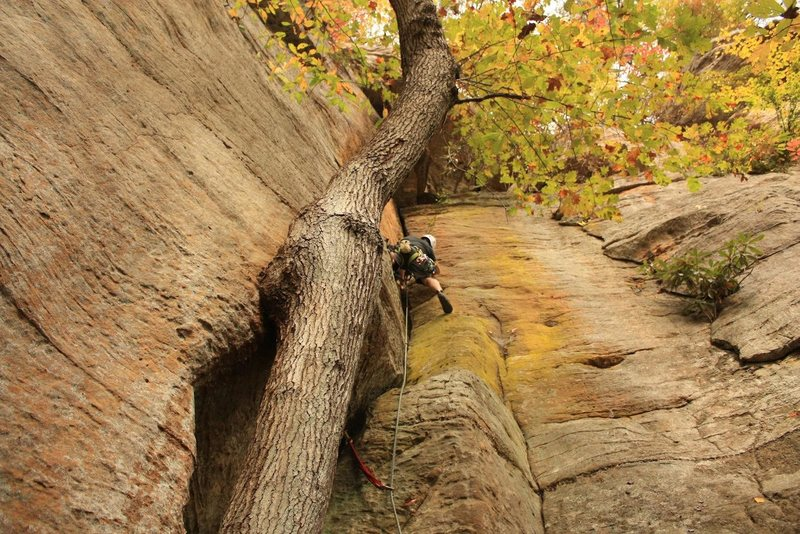 Rock Climbing Photo: Rodrigo Leading up Ol'yeller