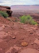 Rock Climbing Photo: Midget faded rattlesnake (Crotalus oreganus concol...