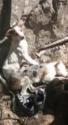 Rock Climbing Photo: Stray Crag Pups!  They provided us good company an...