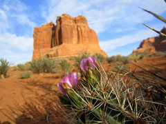 Rock Climbing Photo: First blooms on a fishhook cactus below the Organ....
