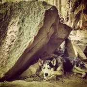 Rock Climbing Photo: camo crag dog