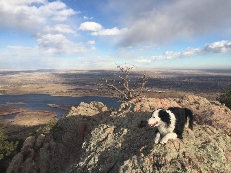 Rock Climbing Photo: Tioga the dog.