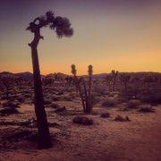 Rock Climbing Photo: Joshua Tree at sunset