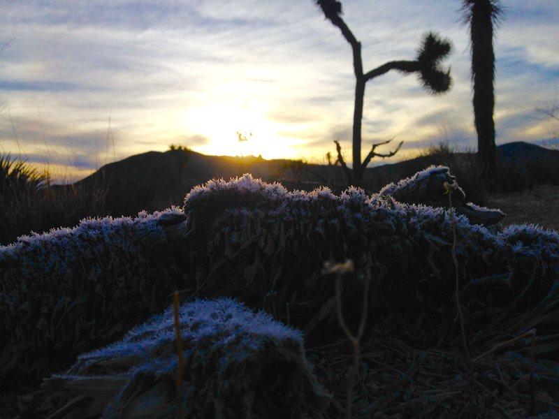 First light frost!!!