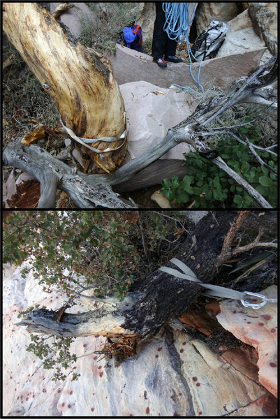 The trees in stick gulley are not sticking to the cliffs so well. The top photo is a rap station now in the streambed; the bottom photo is a rap station whose pine tree is now held in place by the 5 mm cord backup anchor.