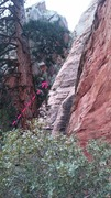 Rock Climbing Photo: Walk past this tree up the narrower gully, to the ...