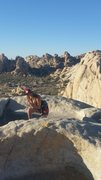 Rock Climbing Photo: A fun first time to Joshua Tree