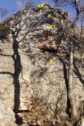 Rock Climbing Photo: El Primero