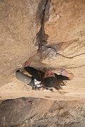 Rock Climbing Photo: Rising Expectations 5.11d Monkey Face, Smith Rocks...