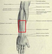The area of the pain