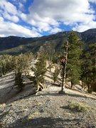 Rock Climbing Photo: Upper Bristlecone Trail