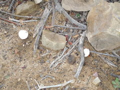Rock Climbing Photo: Say What? You take an egg to the crag and just chu...