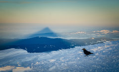 Rock Climbing Photo: Great Oden's Ravens joined us on the summit.