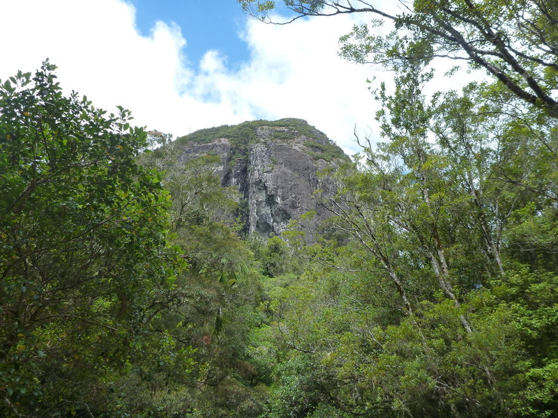 Tairua Crag as seen from the campsite. About 150m high.