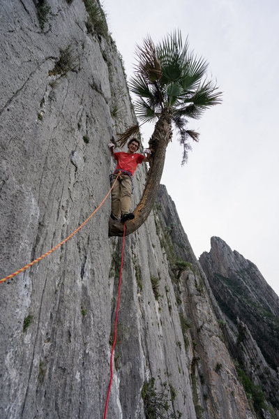 The palm tree on Pitch 5 (12b), classic! Photo by Callen Hearne