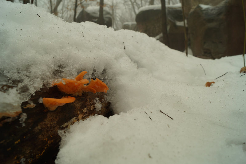 Rock Climbing Photo: Winter life